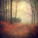 Forest shrouded in fog with a bird psitting on the ground.<br />