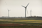 Windmills turn above the tulip fields of North Holland near Egmond aan Zee.