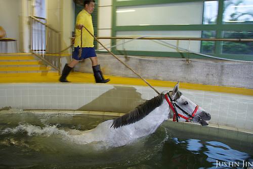 International winner California Memory swims at the Hong Kong Jockey Club.
