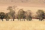 Kgaswane Mountain Reserve