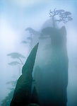 Mist-shrouded rock formations and twisted Huangshan pine trees.