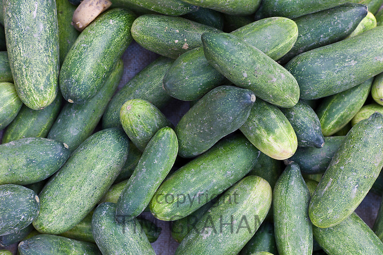 Old Delhi, Daryagang fruit and vegetable market with green cucumbers on sale, India