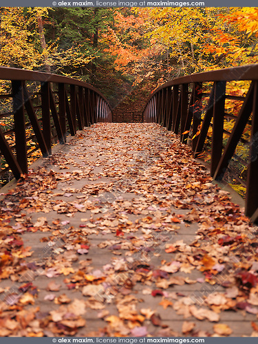 Autumn nature scenery of a bridge covered with fallen leaves. Ontario, Canada.