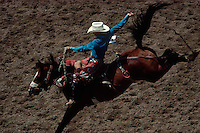 Bronco Rider, Cheyenne Frontier Days, Wyoming