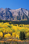 Autumn quaking aspens below East Beckwith Mtn, Gunnison National Forest, Colorado