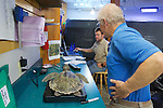 Bob Prescott & Michael Sprague Weighing Olive Ridley Sea Turtle, Sanctuary Director, Welfleet Bay Wildlife Sanctuary, Audubon
