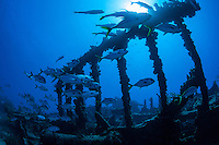 Wreck of The Rhone<br /> Salt Island<br /> BVI
