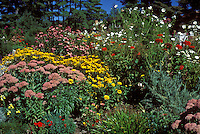 "Autumn border"" Sedum Autumn Joy, Aster novi-belgii Royal Opal, Physotegia, Helianthus multiflorus 'Flore Pleno', Silver King Artemisia"