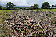 Bananas thrown away behind the banana plantation Changuinola, Panama, 17 September 2004. It has been estimated that about twenty percent of the whole banana harvest is thrown away with no use because the fruit does not meet the company standards to be sold in Europe and the US. Eighty percent of the exported bananas in the world are grown in Latin America. Local farms have no other alternative than to sell for a price offered by the multinational company. When working conditions and ecology is in question, the corporations do not have any responsibility as they do not own plantations. Local governments in the attempt of organizing banana export provide low duty taxes on export, they try to eliminate social and enviromental politics to attract the big companies to their countries.