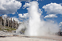 WY00582-00...WYOMING - Giant Geysers in the Upper Geyser Basin of Yellowstone National Park.