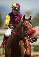 ARCADIA, CA - APRIL 08: Hillhouse High #7, ridden by Corey Nakatani win the Royal Heroine at Santa Anita Park on April 08, 2017 in Arcadia, California.  (Photo by Zoe Metz/Eclipse Sportswire/Getty Images)