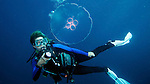 Diver with Moon Jellyfish, Islamorada, Florida