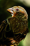 Bird - Sparrow Giving the Evil Eye, Wild Birds of Newport Beach, CA. Photo by Alan Mahood.