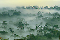 .Canopy of the lowland rainforest at dawn, Danum Valley Conservation Area, Sabah, Borneo, Malaysia