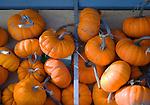 Small bright orange pumpkins at farm stand