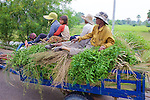 Farmers Transporting Goods