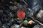Kfar Aza 2014<br />