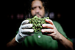 Mario Abad poses for a portrait with a jar of medicinal marijuana at Canny Bus, a nonprofit pot delivery service, January 11, 2011..CREDIT: Max Whittaker for The Wall Street Journal.Bay Area - Cannybus