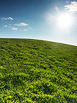 Green grassland landscape under blue clear sky lit with bright sunlight. Nature backdrop background.