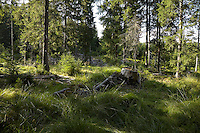 FOREST_LOCATION_90127