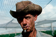 Cuba, March 1992: Worker smoking under the Tapados in Pinar Del Rio. The muslin cover filters the sunlight and traps the heat so the leaves grow larger and are also protected from the  bugs. Only the largest and finest leaves are selected to make cigar wrappers.