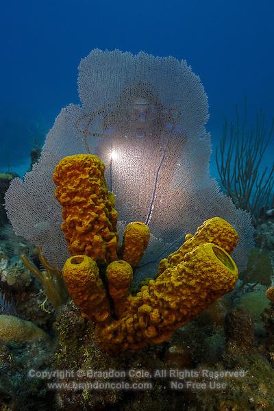 TR5766-D. scuba diver (model released) shines light through Common Sea Fan (Gorgonia ventalina) and Yellow Tube Sponge (Aplysina fistularis). Cayman Islands, Caribbean Sea.<br /> Photo Copyright &copy; Brandon Cole. All rights reserved worldwide.  www.brandoncole.com