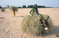 Sudan. West Darfur. Kerenek.A mother and her child riding a donkey loaded with grass cross the dry river (also called wadi).  Another woman walks and carries the grass on her head. © 2004 Didier Ruef