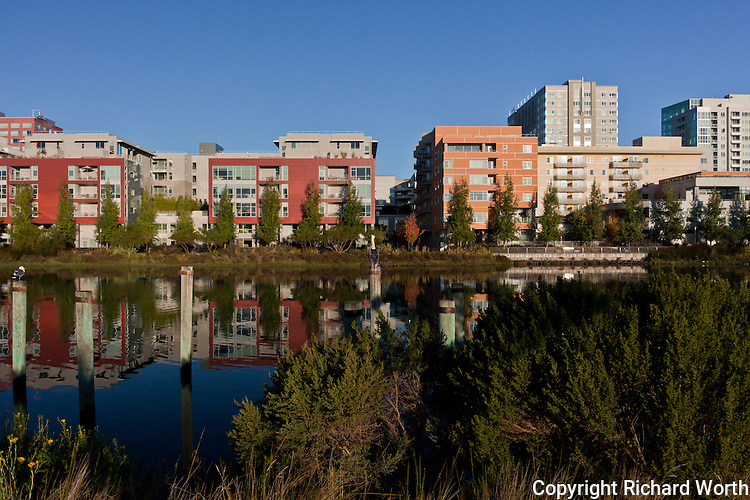 A reflective image taken from the Mission Creek neighborhood side of Mission Creek, with the apartment and office buildings on the China Basin side, and reflected in the water.  Observing it all, a gull on the left and In the middle, a brown pelican.
