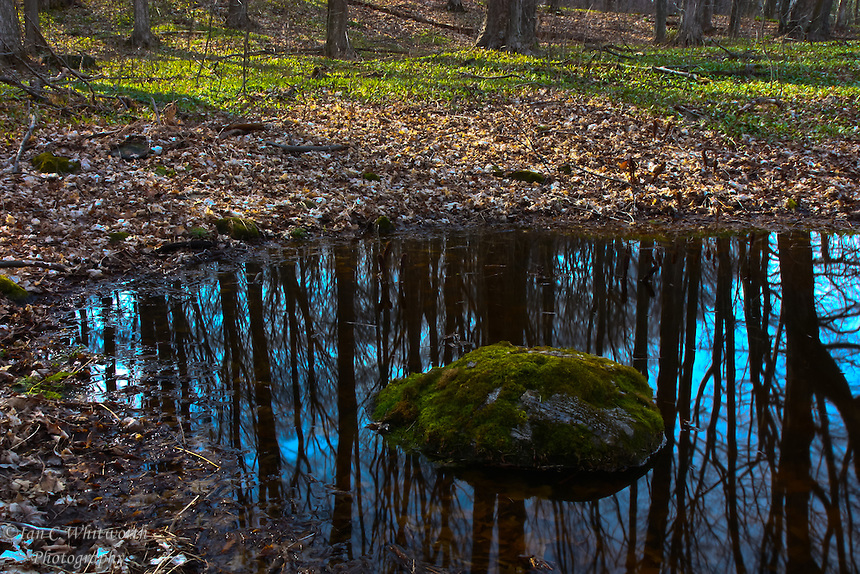 A mossy rock sits in a pond reflecting the forest