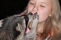 """Waschbär, verwaistes, pflegebedürftiges Jungtier wird in menschlicher Obhut großgezogen, Kind, Mädchen spielt und schmust mit Waschbär, Tierkind, Tierbaby, Tierbabies, Waschbaer, Wasch-Bär, Procyon lotor, Raccoon, Raton laveur, """"Frodo"""""""