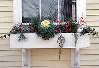 Winter Windowbox Garden with ornamental kale vegetable, berries, ivy, evergreen branches