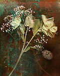 Dried flowers on a textured background