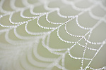 Columbia Ranch, Brazoria County, Damon, Texas; a spider web covered in early morning dew drops of water