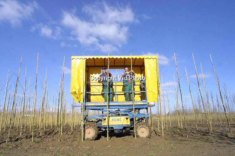 Foto: VidiPhoto..KESTEREN - Op een 8 ha. groot perceel in Kesteren snoeit personeel van boomkweker Martin van de Bijl uit Opheusden met een overdekte hoogwerker eenjarige acers. Dankzij het op een poppenkast lijkende voertuig kan er ook tijdens wind en regen gewoon doorgewerkt worden. De verkoop van bomen verkeert landelijk in een dip, omdat het de laatste weken veel te nat is, waardoor er weinig vraag is naar bomen. Toch moeten ze snel uit de grond. In ieder geval voordat de knoppen uitlopen.