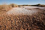 Dry cracked desert soil with salt along the Oodnadatta Track.