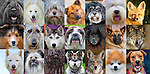 Mosaic of Dogs