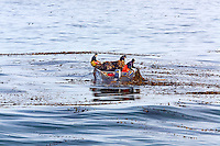 Kelp harvesting in Monterey Bay, California.