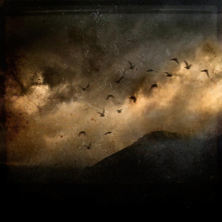 Birds flying in a dark sky