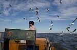 Colônia de pescadores Z16. Comunidade do Porto, em Santa Vitória do Palmar - Rio Grande do Sul. O pescador Gelson volta de um dia de pesca, acompanhado das gaivotas  que sobrevoam o seu barco cheio de peixe-rei e pintado.