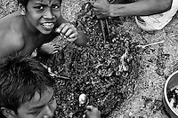 Indigenous boys suck honey from a honeycomb of wild bees, deep in the Amazonian jungle in Brazil, 25 April 2004. Amazonia is the world's largest dense tropical forest area. Since the 16th century the original indigenous people have been virtually pushed away or exterminated. The primal ancient unity between tribes and the jungle ambient has changed into a fight between the urban based civilization and the jungle enviroment. Although new generations of white and mestizo settlers have not become adapted to the wild tropical climate and rough conditions, they keep moving deeper into the virgin forest. The technological expansion causes that Amazonia is changing rapidly.