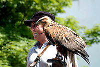 Liechtenstein  Malbun  June 2008.Small town high in the Alpine (southeastern)..Falconry Center.The falconer Norman  Vogeli with Harris' Hawk (Parabuteo unicinctus) and tourist.www.galina.li...