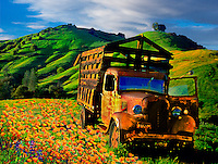 Old Truck & Poppies