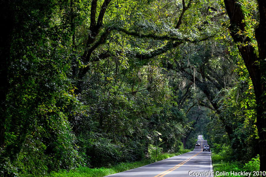 TALLAHASSEE, FLA. 8/23/10-VISITTALLY-082310-HACKLEY-A drive east from town on Miccosukee Road will treat visitors to one of Tallahassee's canopy roads...COLIN HACKLEY PHOTO