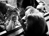 Wroclaw, Poland, April 5, 2009:<br /> Young visitors looking at the gibbon, at the Wroclaw Zoo.(Photo by Piotr Malecki / Napo Images)..Odwiedzajacy i gibon w Zoo..Wroclaw, Kwiecien 2009.Fot: Piotr Malecki / Napo Images