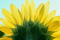 Botanicals In Summer