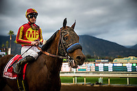 ARCADIA, CA - FEBRUARY 04: Hoppertunity #1, ridden by Flavien Prat returns victorious after the San Antonio Stakes at Santa Anita Park on February 4, 2017 in Arcadia, California. (Photo by Alex Evers/Eclipse Sportswire/Getty Images)