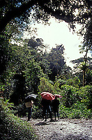 Early morning birdwatchers in the Monteverde Cloud Forest Reserve, Costa Rica