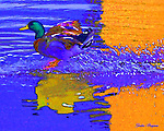 A duck splashes down in this highly stylized graphic interpretation. Shot near Pigeon Forge , Tennessee's Old Mill. Smoky Mountain photos by Gordon and Jan Brugman.
