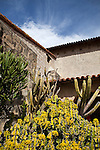 Euphorbia pseudocactus<br /> (Common name: Dragon Bones, Candelabra Spurge, Lucky Cowboy, Tiger Tree) in the foreground and other cacti in the garden of Old Mission Santa Barbara, California, USA