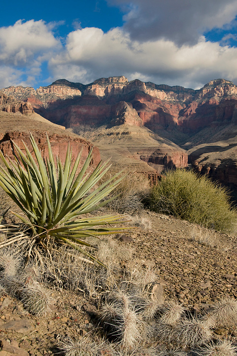A typical scene from the Tonto Platform, lots of cactus and big, big views. This shot is looking towards the North Rim in the Clear Creek drainage.